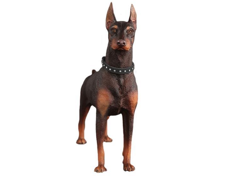 Фото собак фирмы коллектор