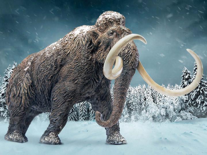 Wonder Wild Woolly Mammoth