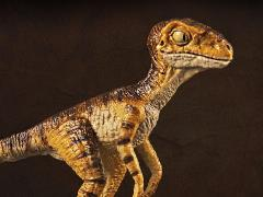 "Velociraptor mongoliensis Baby ""Stan"" 1/18 Scale Museum Class Replica"