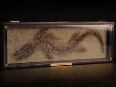 "Oddities Fossil Studies Tylosaurus proriger ""Charon"" 1/50 Scale Museum Class Replica"