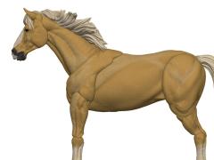 Vitruvian H.A.C.K.S. Basic Steeds Goldie