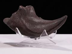 Allosaur Toe Claw Replica
