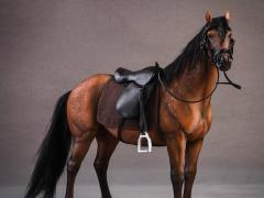 Hanoverian Horse (Chestnut) & Saddle 1/12 Scale Set