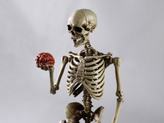 Human Skeleton 1/6 Scale Figure
