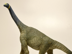 Atlasaurus 1/40 Scale Replica