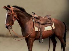 James Dean Horse 1/6 Scale Accessory Set